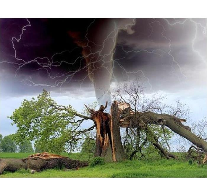 A tornado funnel over a tree that has been damaged by high winds with lightning surrounding the area