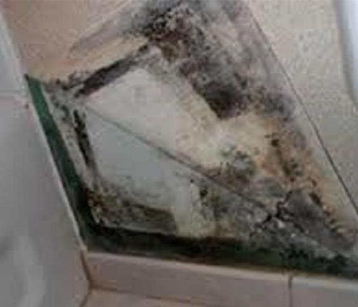 Mold Remediation Types of Mold: Aureobasidium